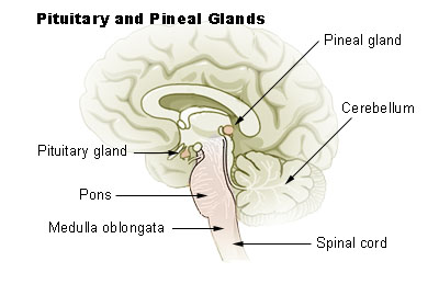 Corpus pineale ili epifiza
