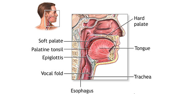 Anatomija i fiziologija ždrijela