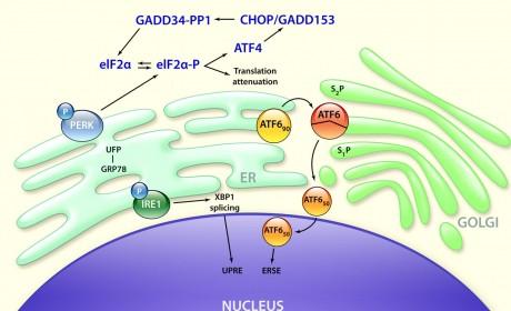 Protein koji liječi ebolu