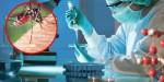 U Bugarskoj potvrđen prvi slučaj zaraze virusom zapadnog Nila