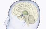 Klinička slika Hipopituitarizma
