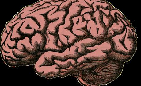 Metode pretraživanja centralnog nervnog sistema