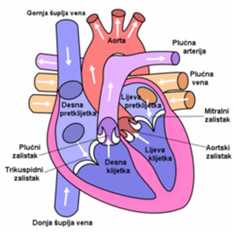 Insuficijencija srca