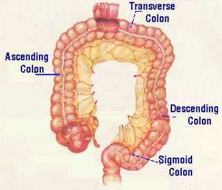 Colon descendens