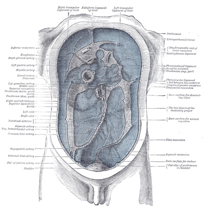 Sekundarni peritoneum