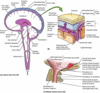 moždane ovojnice