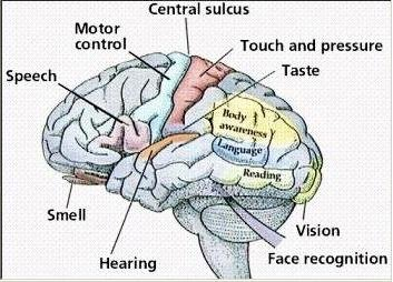 Apsces mozga
