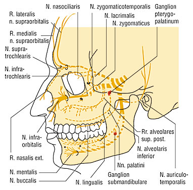 Neuralgija nervus trigeminusa