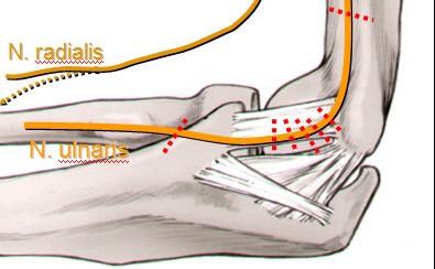 nervus ulnaris