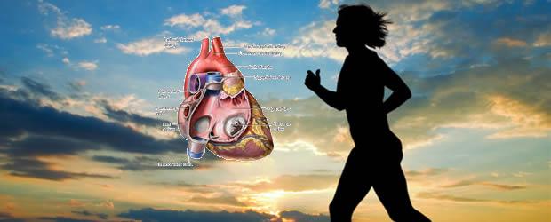fizička aktivnost