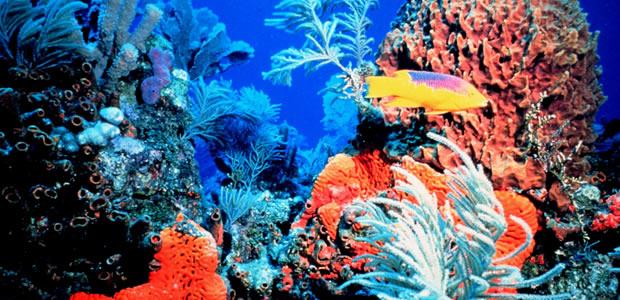 Morski život