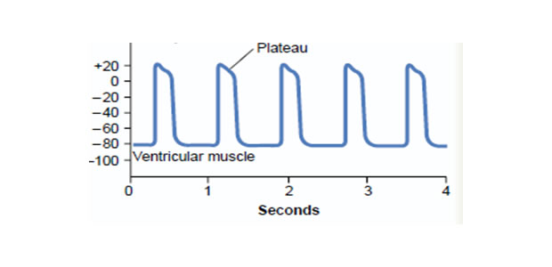Fiziologija srčanog mišića