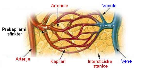 Mikrocirkulacija