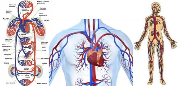 sistemski krvotok