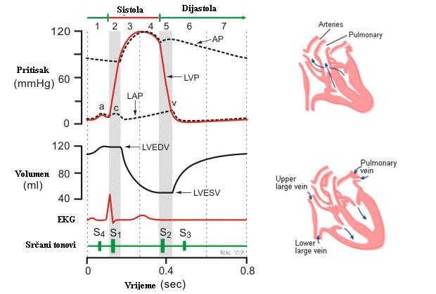 srčani tonovi