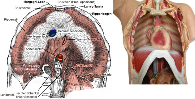 Bolesti dijafragme