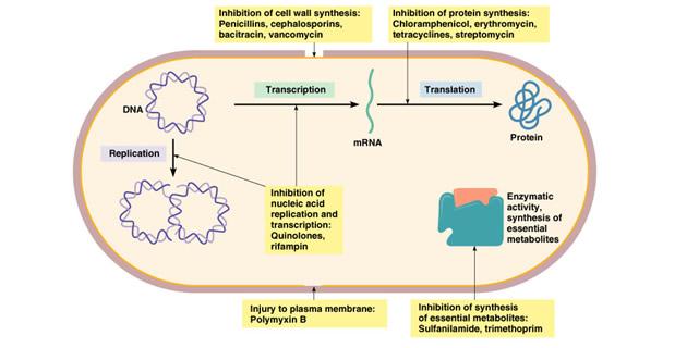 Djelovanje antibiotika