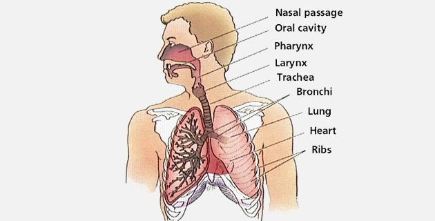 Oboljenja respiratornih organa
