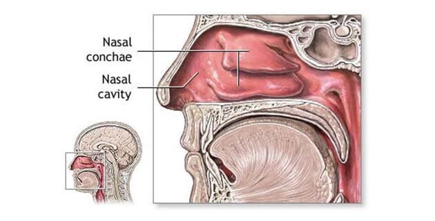 Anatomski prikaz nosa