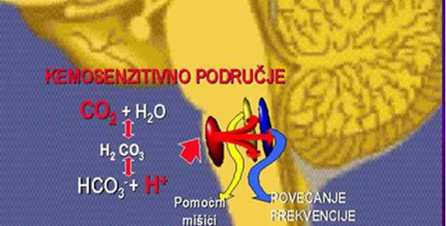 Humoralna regulacija disanja