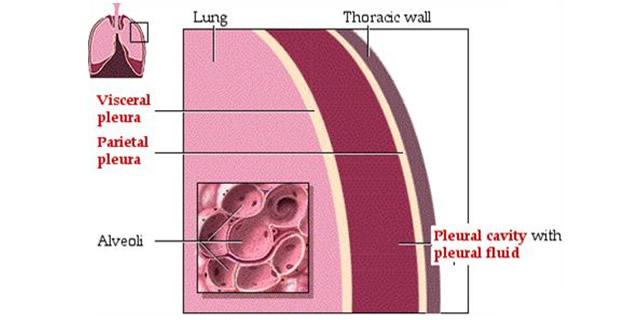 Intrapleuralni i intraalveolarni pritisak