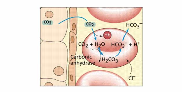 Prijenos CO2