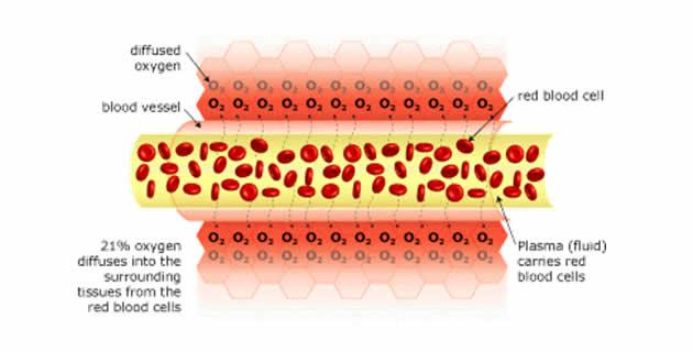 Prijenos kisika putem krvi