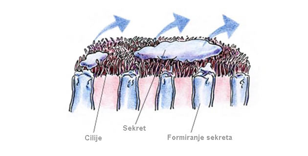 Rhinitis sicca anterior