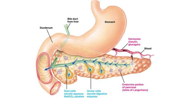 Pankreasni sok