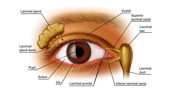 Conjunctivitis follicularis