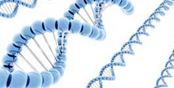 Bakterijska Genetika