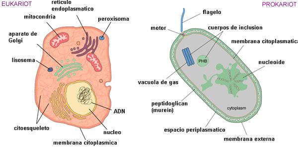 Podjela mikroorganizama
