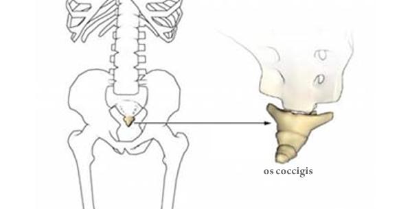 Prijelom trtične kosti