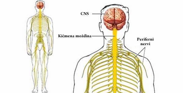 Mioklonus