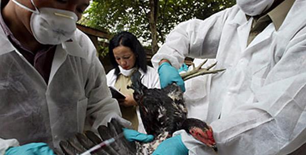 Ptičji grip