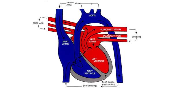 Transpozicija velikih krvnih sudova