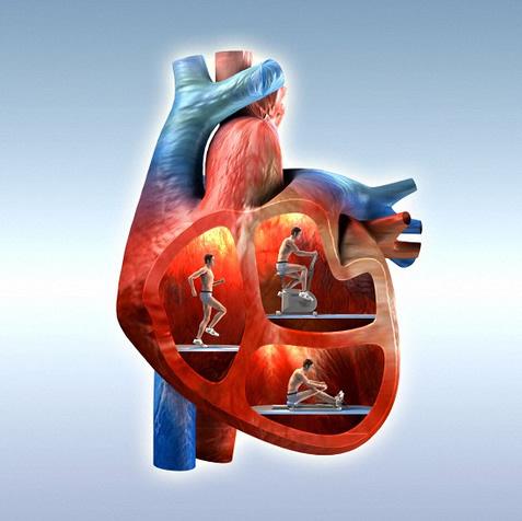 Zdravo srce