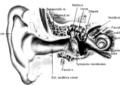 Fiziologija uha