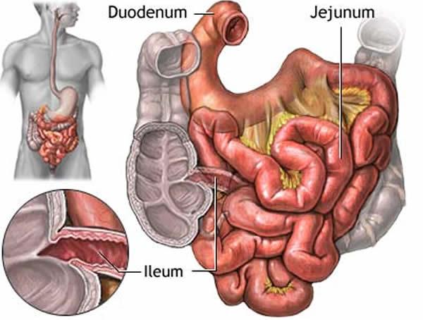 Tanko crijevo