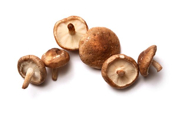 Shiitake gljiva