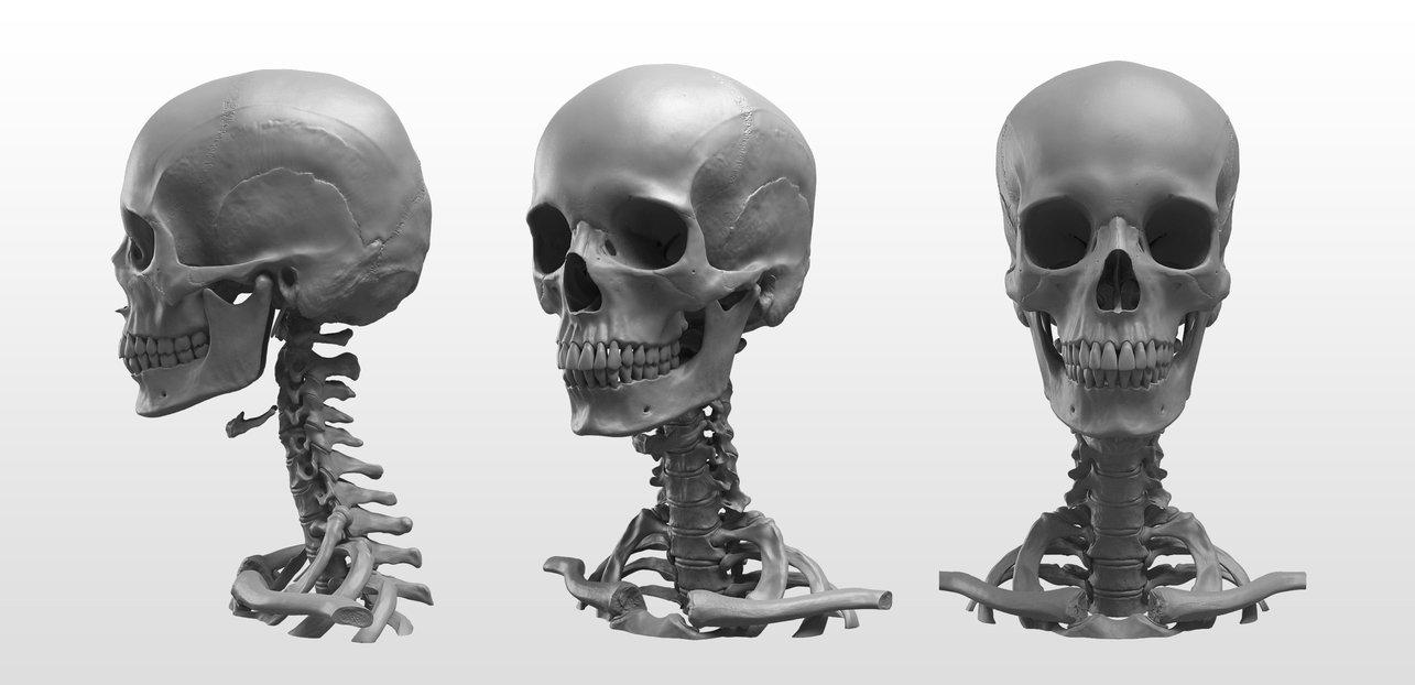 Anatomija glave
