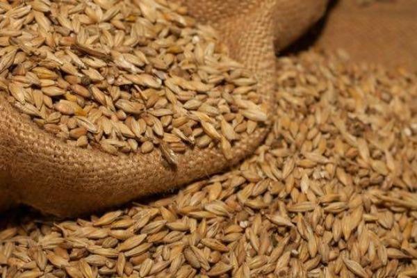 Bolesti pluća izazvane prašinom žitarica