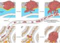 Manipulacijom imunološkog sistema moguće zaustaviti širenje raka