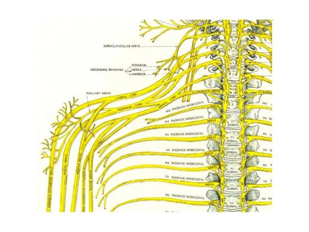 Simptomi i znaci oštećenja perifernog nervnog sistema