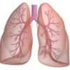 pluća ne služe samo za disanje